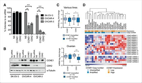 Resistance to CDK2 Inhibitors Is Associated with Selection