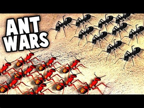 RED ANTS vs BLACK ANTS! HUGE Ant Surface INVASION (Empires