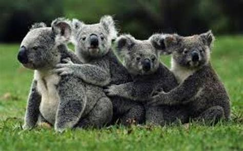 10 Facts about Australian Animals | Fact File