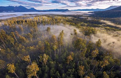 Crunch time for Tasmanian forests as UNESCO decision looms